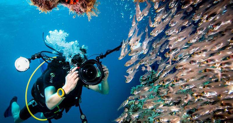 Diving experience in Maldives