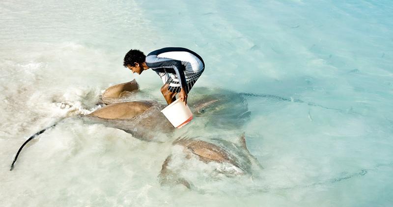 Feeding stingrays in Maldives